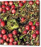 Frog Peaks Up Through Cranberries In Bog Canvas Print