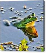 Frog Reflection Canvas Print