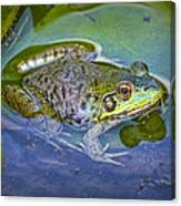 Frog Resting On A Lily Pad Canvas Print