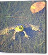 Froggie Sitting In The Water Canvas Print