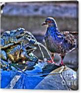 Frogs And A Pigeon Canvas Print