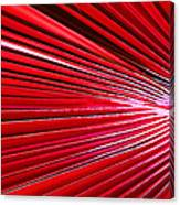 Frond Of Red Canvas Print
