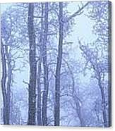 Frost Covered Trees In Fog, Alaska Canvas Print