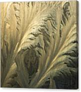 Frost Crystal Patterns On Glass, Ross Canvas Print