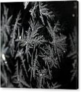 Frost On Glass Canvas Print
