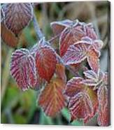 Frost On Leaves No. 3 Canvas Print