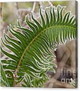 Frosted Fern Canvas Print