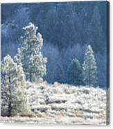 Frosted Morning Canvas Print