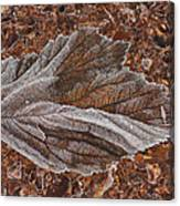 Frosted Raspberry Leaf Canvas Print