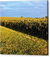 Frosted Soybeans Canvas Print
