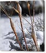 Frosted Trumpets Canvas Print