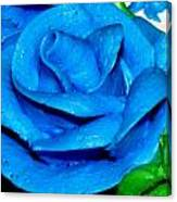 Frosting Rose Canvas Print