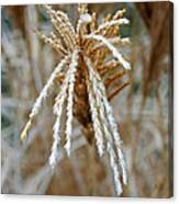 Frosty Fountain Grass Canvas Print
