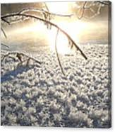 Frosty Ice At Sunrise Canvas Print