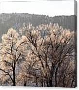 Frosty Tree Canvas Print