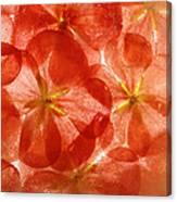 Frozen Flora 6 Canvas Print