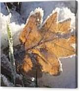 Frozen Oak Leaf Canvas Print