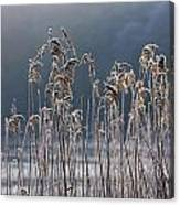 Frozen Reeds At The Shore Of A Lake Canvas Print