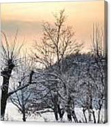 Frozen Trees Canvas Print