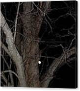 Full Moon Beyond The Old Tree Canvas Print