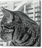 Full Profile Of The Cat - Black-and-white Canvas Print