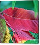 Full Spectrum Sumac Canvas Print