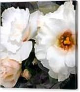 Full White Roses Canvas Print
