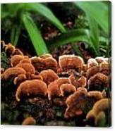 Fungus Among Us Canvas Print