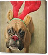 Funny Boxer Puppy Canvas Print