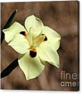 Funny Face Flower Canvas Print