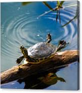 Funny Turtle Catching Some Rays Canvas Print