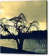 Furman Lake Tree Canvas Print