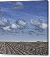 Furrows In A Texas Field Canvas Print