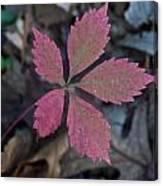 Fushia Leaf Canvas Print