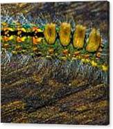 Fuzzy Caterpillar Canvas Print
