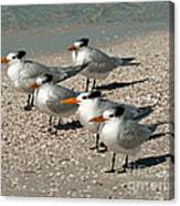 Gaggle Of Gulls Canvas Print
