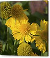 Gaillarde Mesa Yellow Canvas Print