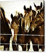 Galloping Brothers  Canvas Print