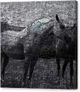 Galloping Stones Canvas Print