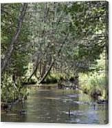 Gamble Creek Canvas Print