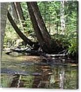 Gamble Creek3 Canvas Print