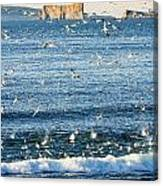 Gannets In Flight And Perce Rock Canvas Print