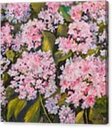 Garden Close Up Canvas Print