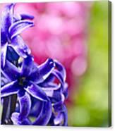 Garden Color Splash Canvas Print