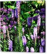 Garden Flowers 1 Canvas Print