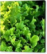 Garden Fresh Salad Bowl Lettuce Canvas Print
