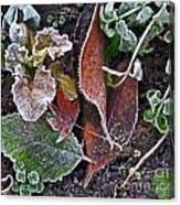 Garden Frost Canvas Print