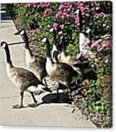 Garden Geese Parade Canvas Print