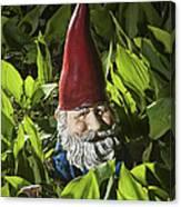 Garden Gnome No 0065 Canvas Print