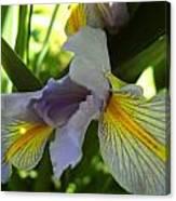 Garden Iris Canvas Print